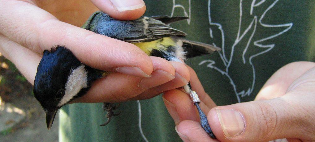 Dan otvorenih vrata: javni prikaz prstenovanja ptica