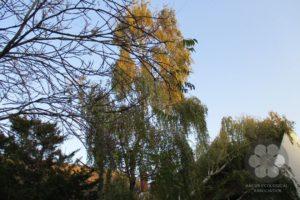 Slomljena grana breze pala na krov apoteke (Photo: Sihelnik József)