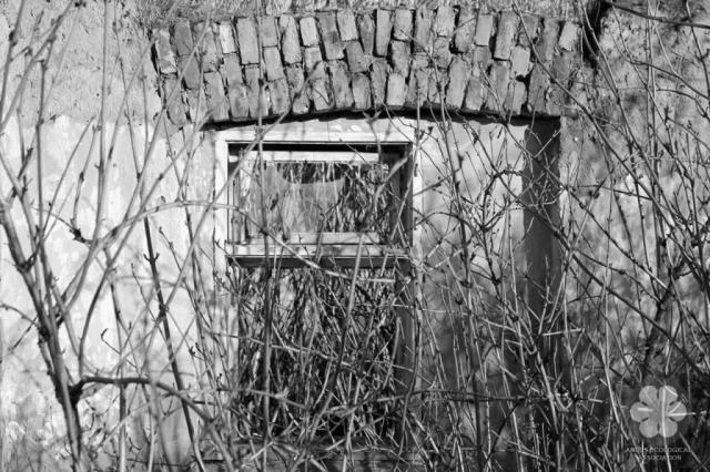 Burjánzó szoba (Photo: Sihelnik József)