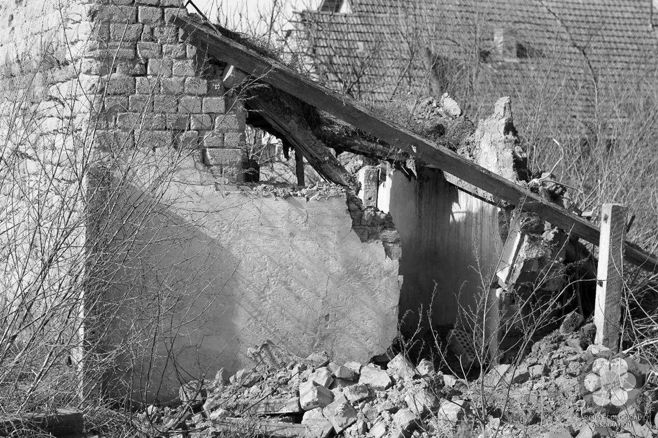 Ól áldozat (Photo: Sihelnik József)