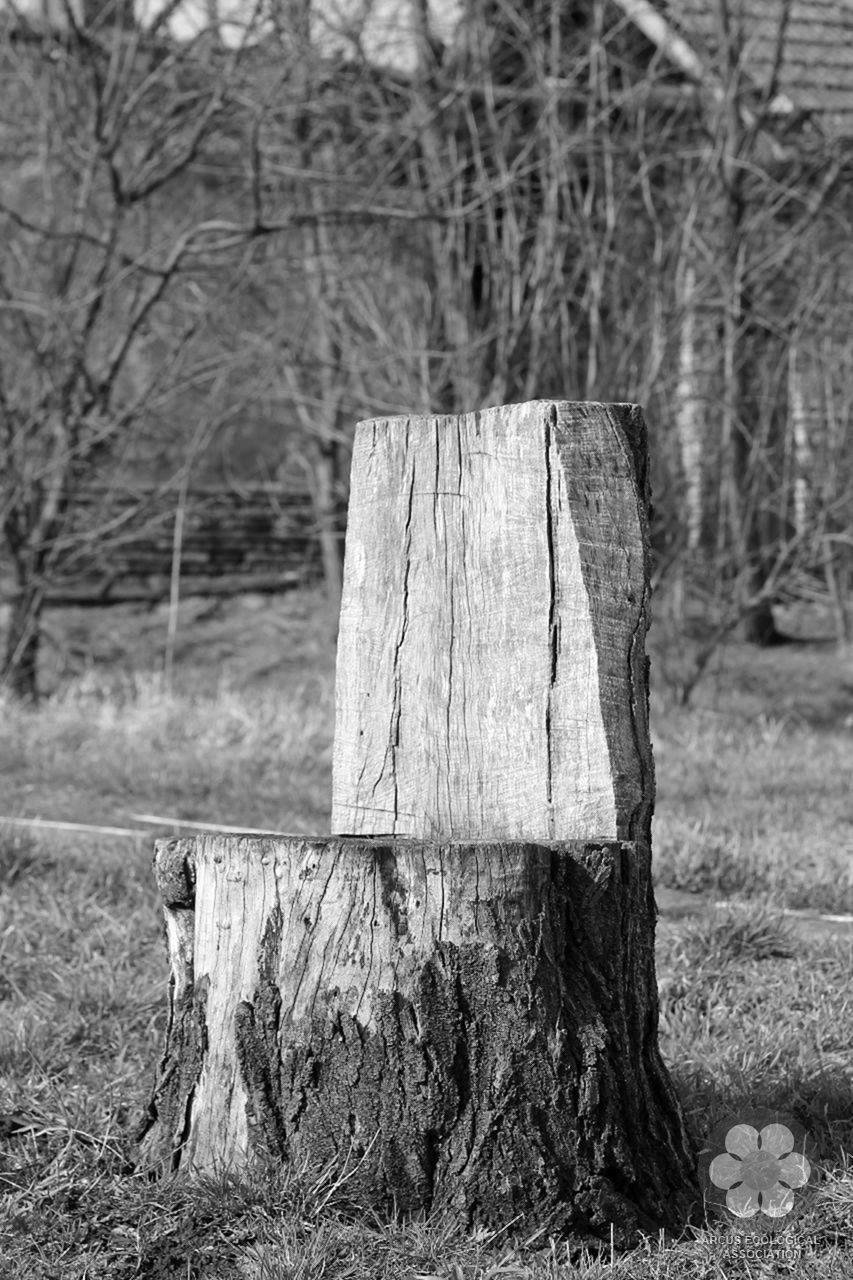 Fából szék (Photo: Sihelnik József)