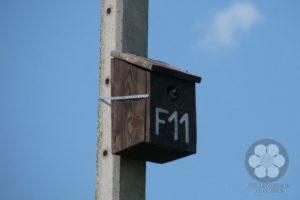 Mesterséges fészekodú villanyoszlopon (Photo: Ali Hermina)