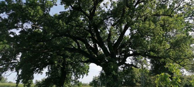 A Természetvédelem határok nélkül – természetismereti vetélkedő eredményei